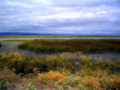Fall colors in the marsh