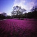 Pink carpet, zero2000